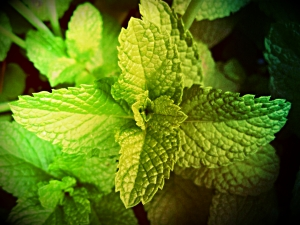 benefits-of-peppermint