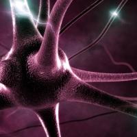 Rockefeller University study: Two neurotransmitters in brain region influence nicotine dependence
